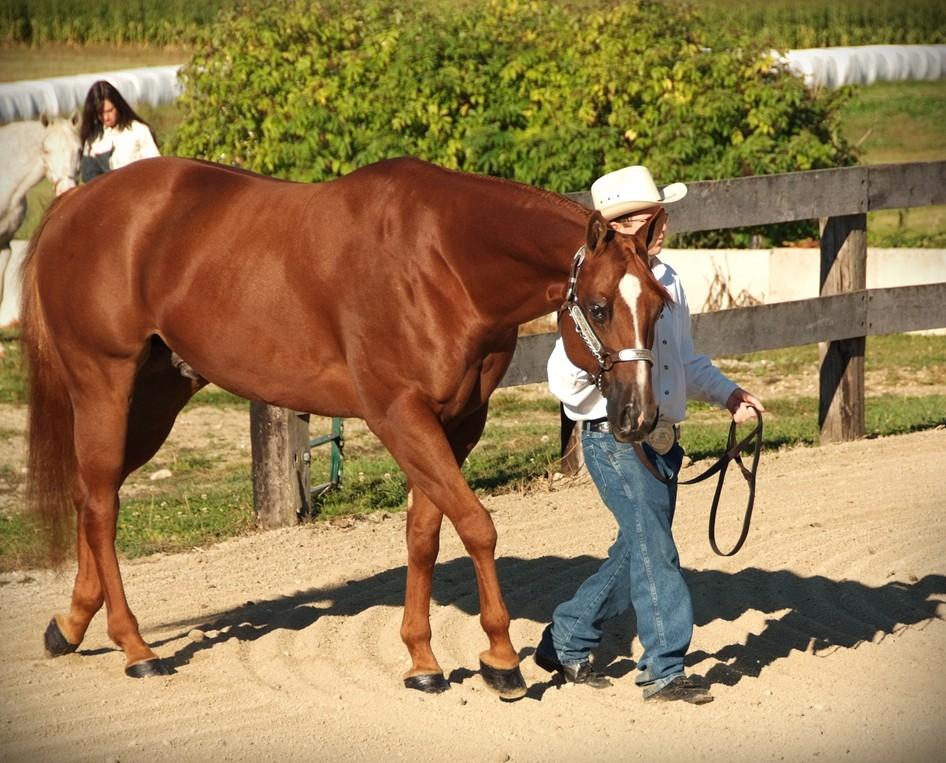 gator nathaniels horse