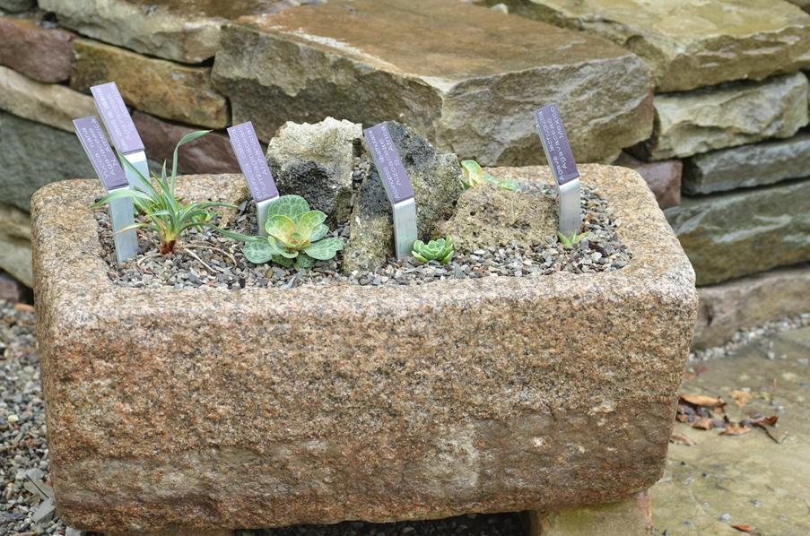 small trough planter